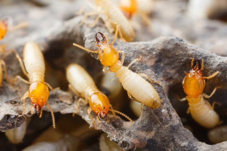 Termite Inspection Residential Pest Control