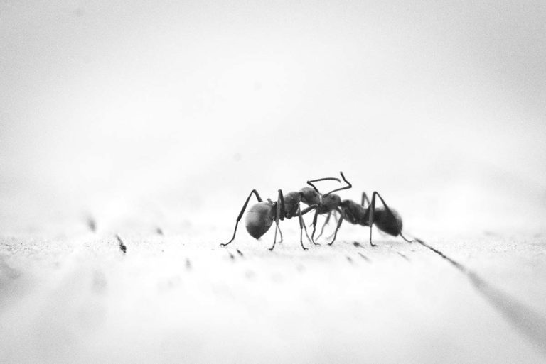 ant removal and treatment